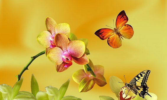 Yellow Orchid, Lilac Orchid