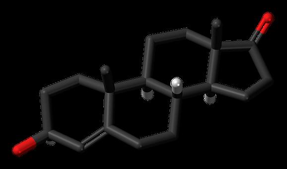 Dehydroepiandrosterone, Steroid