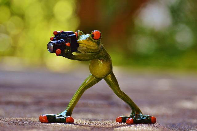 Free photo: Photographer, Frog, Funny, Green - Free Image ...
