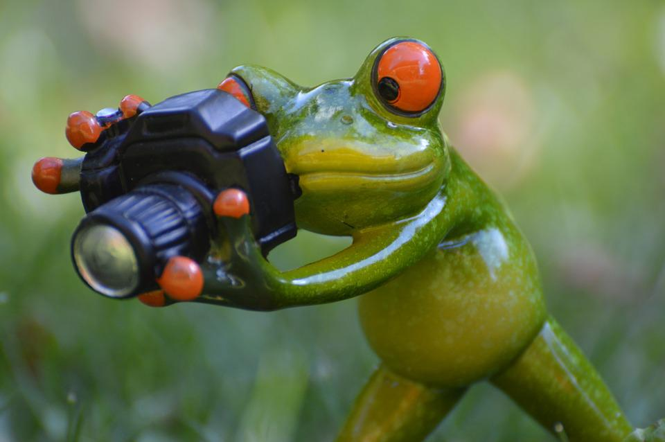Foto Gratis Fotografer Katak Lucu Hijau Gambar Hewan Dunia Binatang