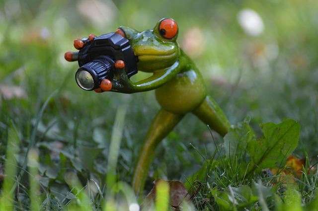 Photographer frog funny free photo on pixabay - Funny frog pictures ...