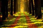 las, ścieżka, drzewa