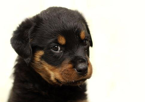 Teacup Puppies for sale in WI