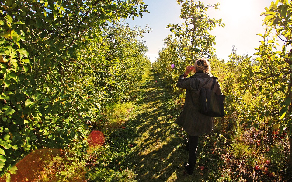 Apple, Farm, Girl, Walk, Sun, Fruit, Nature, Garden