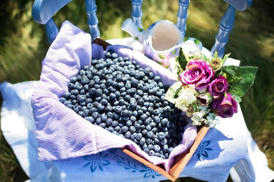 Mirtilos, Verão, Frutas, Saudável, Frescos, Doces