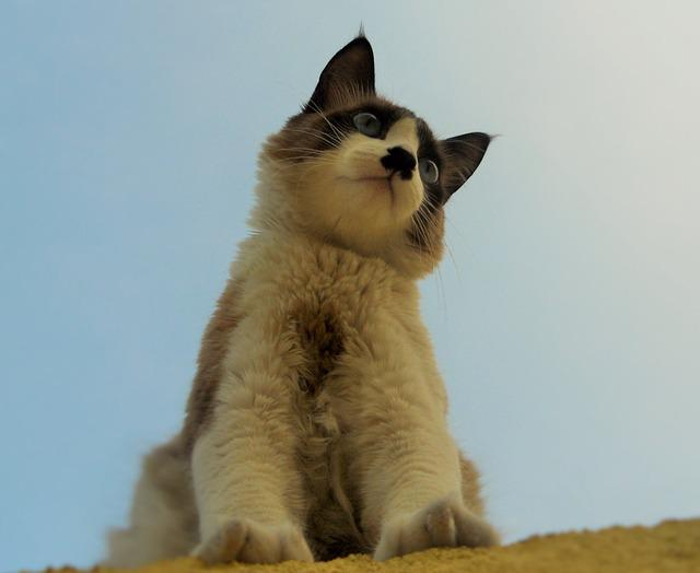 what does it mean when cats growl