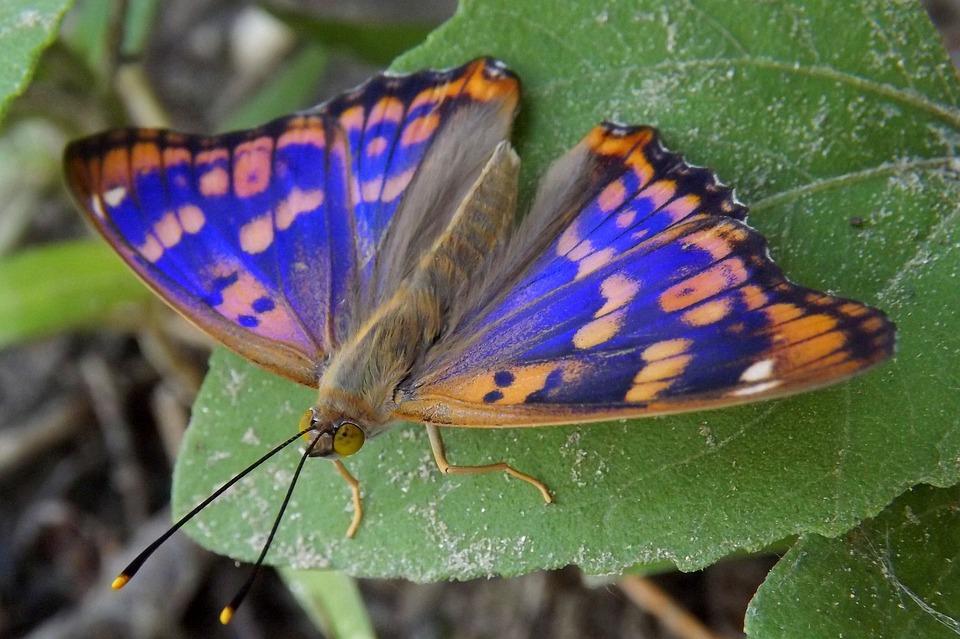 Schmetterling Blau Färbung · Kostenloses Foto auf Pixabay