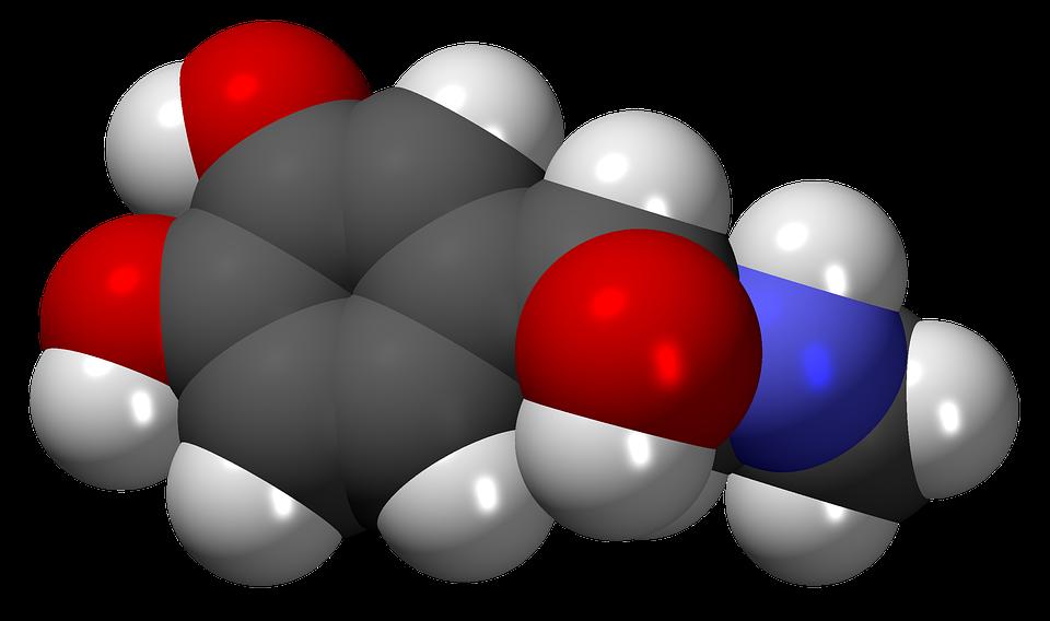 Adrenaline Hormone Free Image On Pixabay