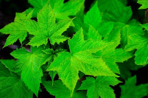 green free images on pixabay