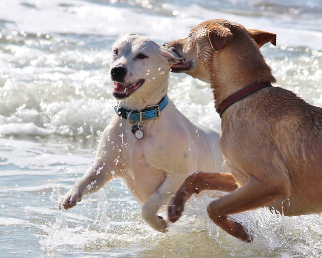 Dogs Romp Play 183 Free Photo On Pixabay