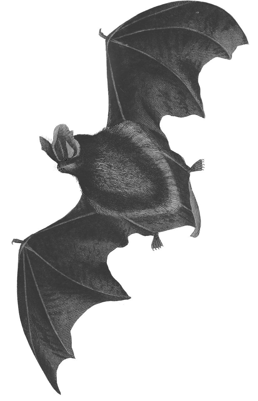 Летучая мышь рисованная картинки