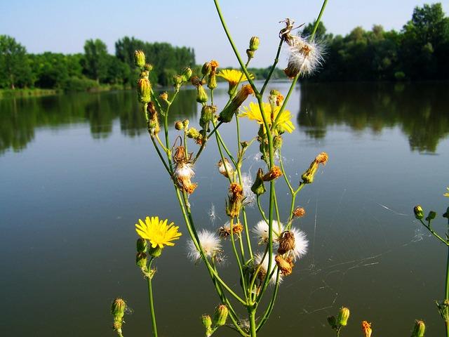 Photo gratuite mauvaise herbe jaune image gratuite sur - Mauvaise herbe fleur jaune ...