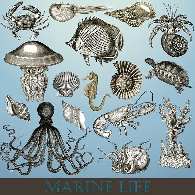 Lobster Underwater Marine Life Sea ·...
