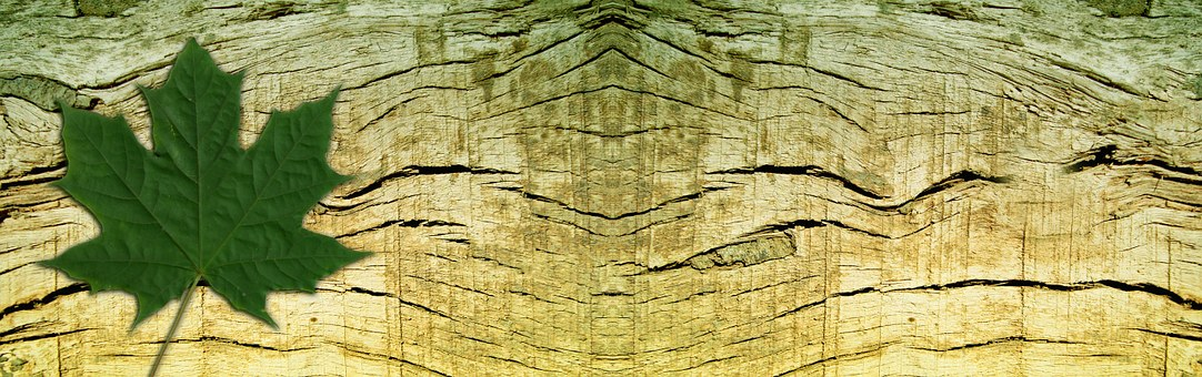 Banner Header Wood Grain Leaf Maple T