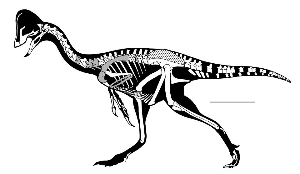 Oviraptorosaurian Kerangka Gambar Gratis Di Pixabay