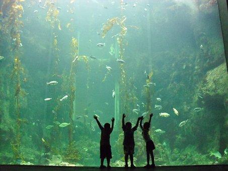儿童, 水族馆, 水, 海, 鱼, 生活, 自然, 动物, 乐趣, 水下, 游泳