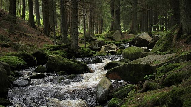 The Hunt Stream