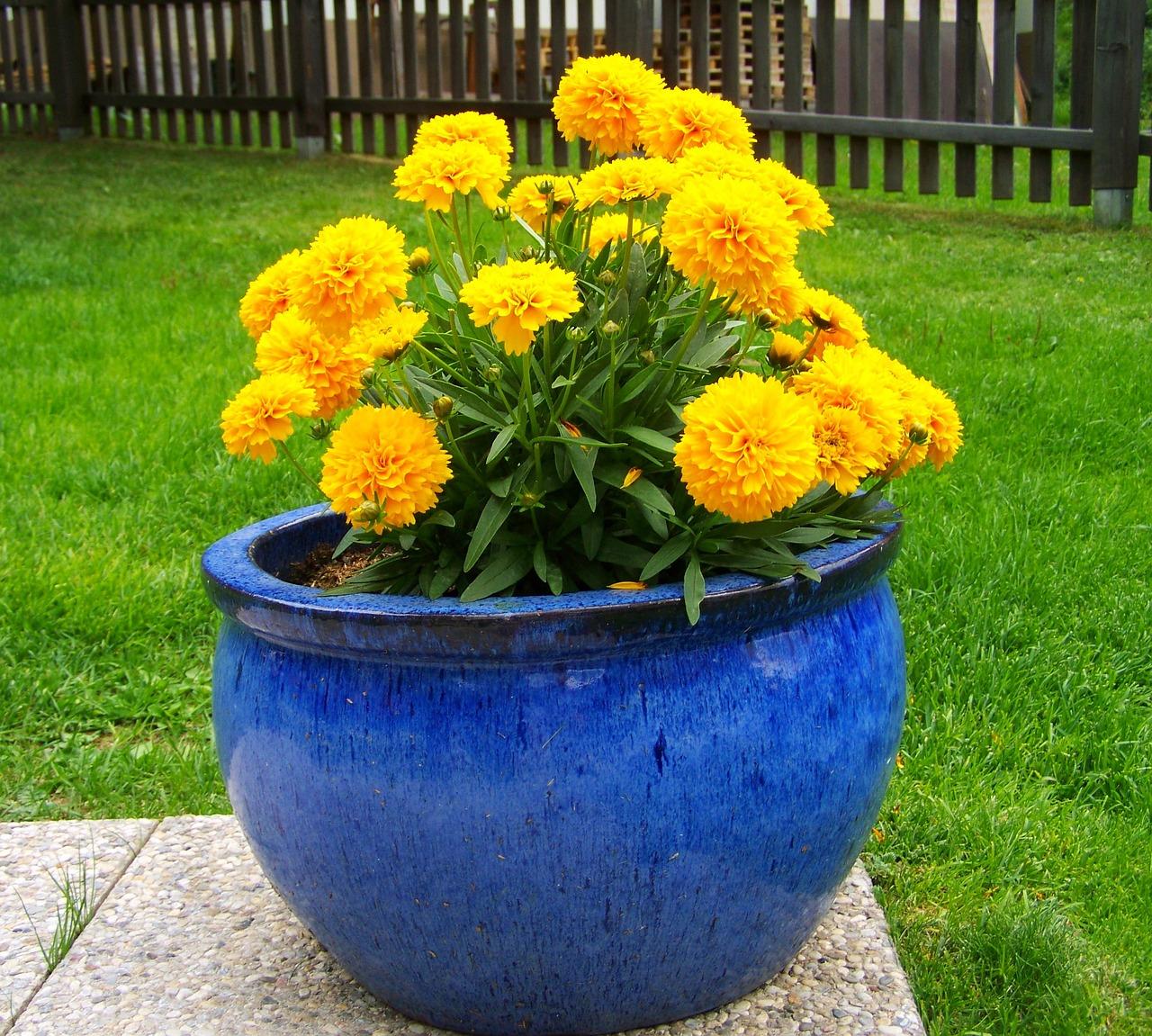 Цветы на клумбы названия и фото желтые