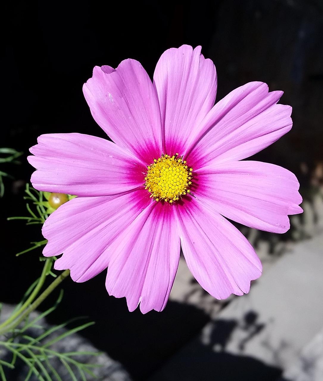 один цветок фото картинки