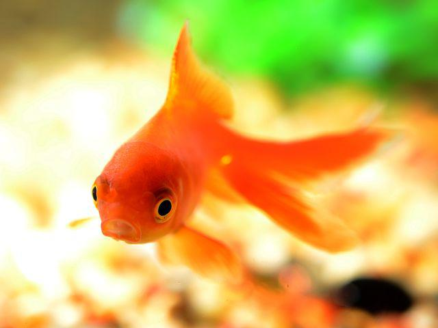 Если женщине приснилась живая и свежая рыба.