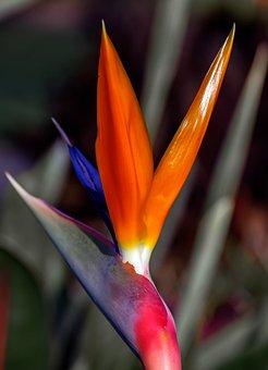 Oiseau De Paradis Fleurs Images Pixabay Telechargez Des Images