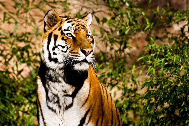 Free photo: Tiger, Wildcat, Power, Majestic - Free Image on ...