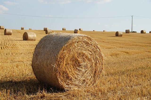 free photo  straw  bale of straw  field