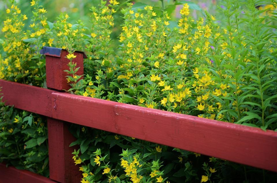 Houten Hekwerk Tuin : Hek tuin hout · gratis foto op pixabay