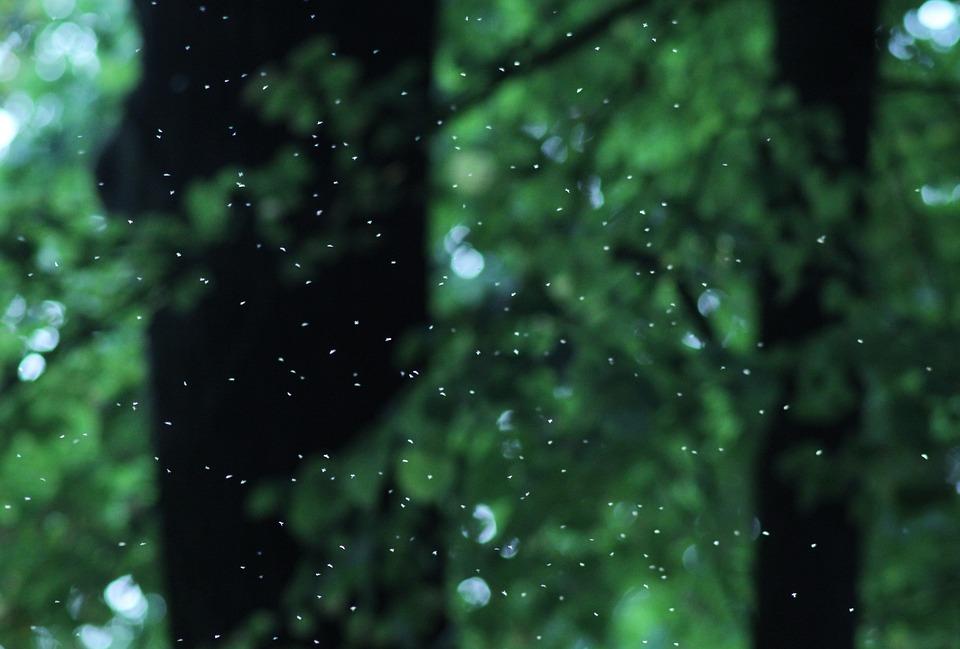 Wald Mucken Licht Kostenloses Foto Auf Pixabay