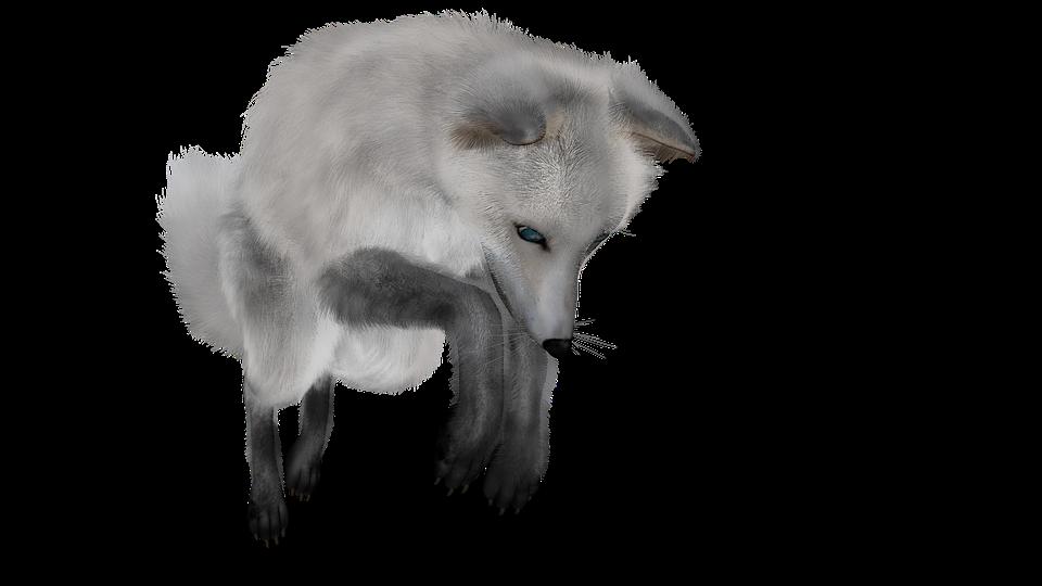 Fuchs Wei 223 Tierwelt 183 Kostenloses Bild Auf Pixabay