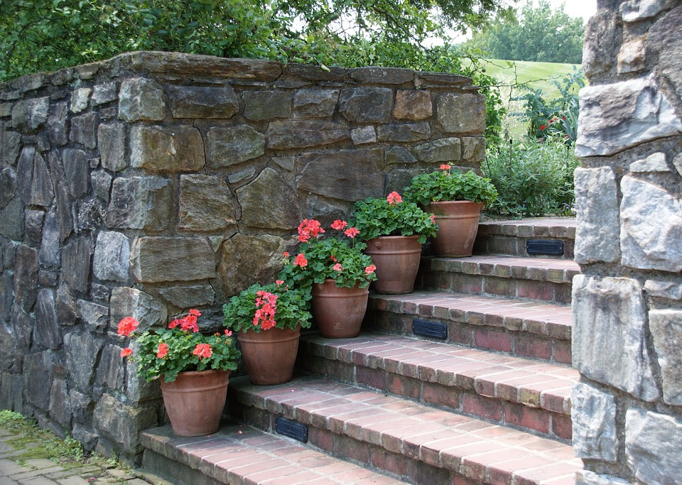 Garden, Outdoors, Wall, Steps Geraniums, Summer, Plant