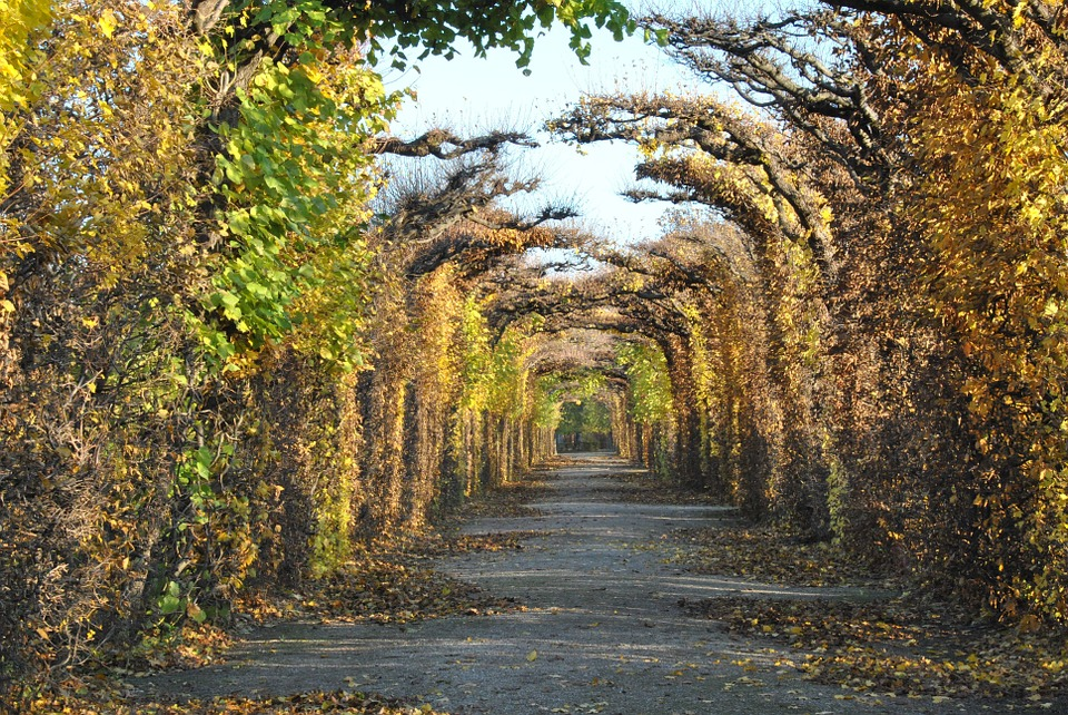 Free Photo Vienna Autumn Tree Landscape Free Image