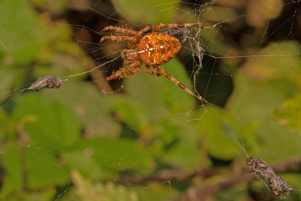 одной млечный пауки картинки аанг