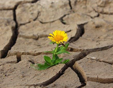 Flower, Life, Crack, Desert, Drought