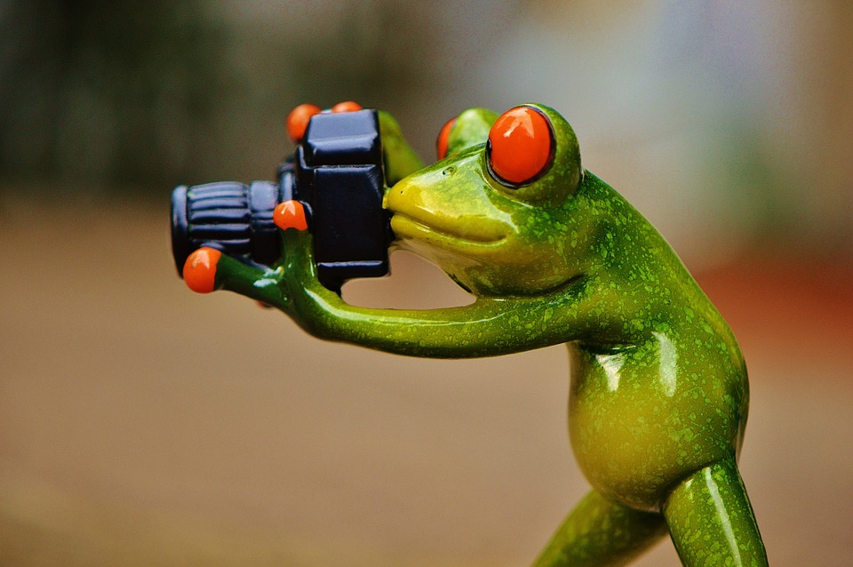 free photo frog photographer model free image on pixabay 881654