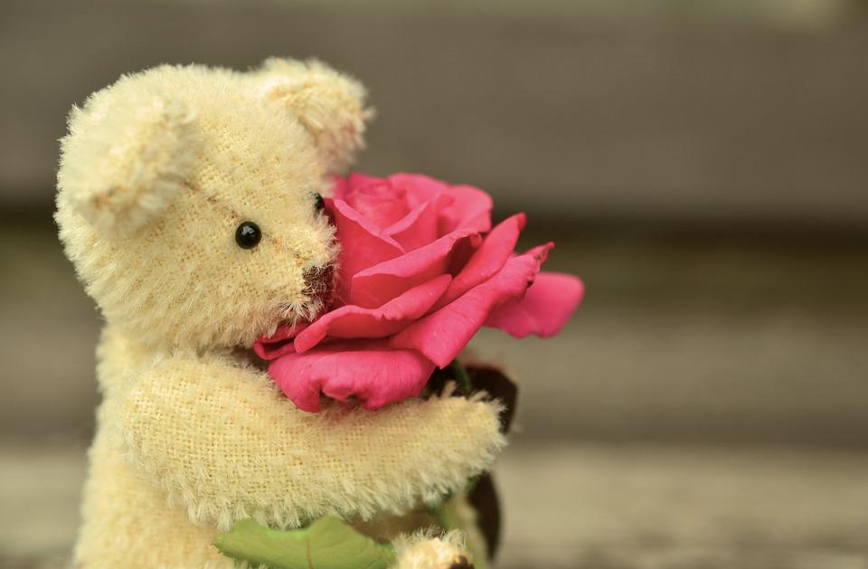 Teddy Bear Rose Free Photo On Pixabay