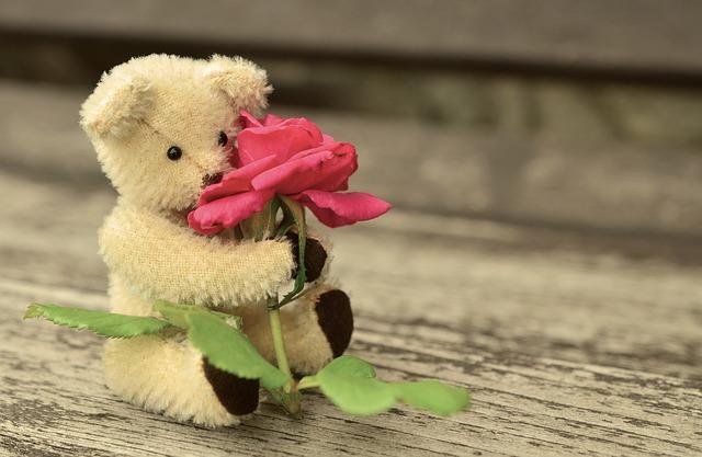 free photo teddy teddy bear rose romantic free image on