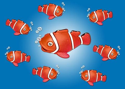 Clown Fish, Nemo, Fish, Underwater