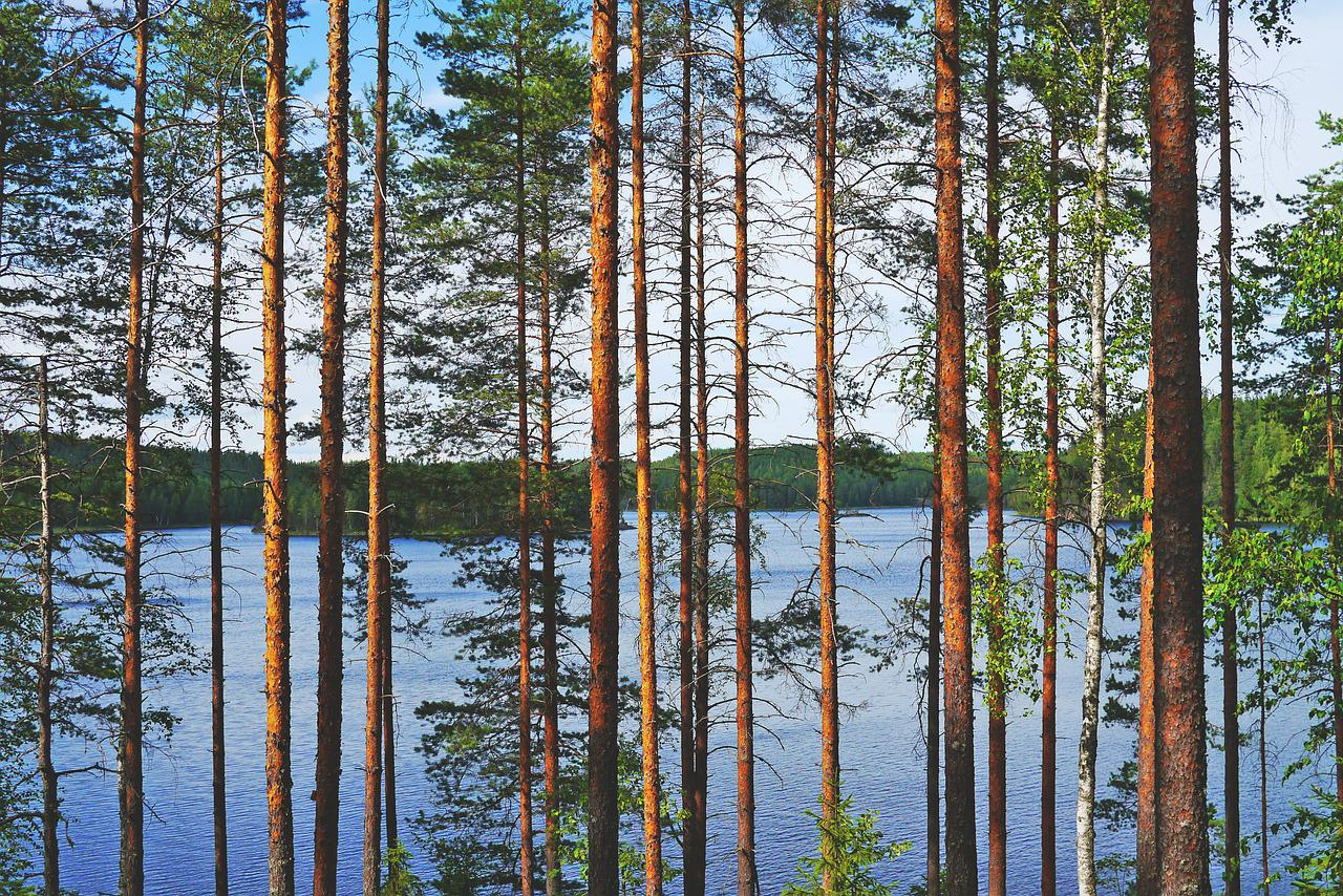 Lake, View, Pine, Water, Blue, Nature, Landscape, Trees