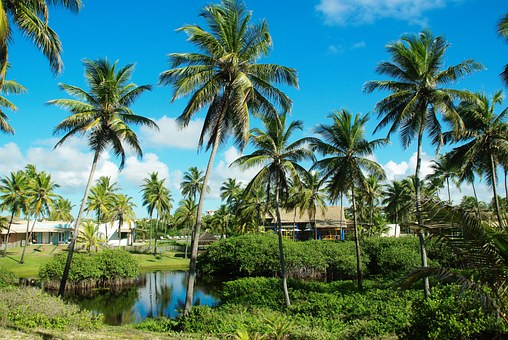 Brazilwood, Beach, Coconut Trees
