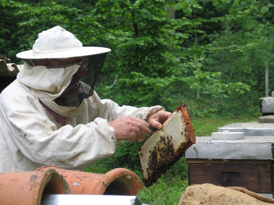 Пчелы, Пчеловодство, Мед, Пчеловод, Пасека, Beegarden