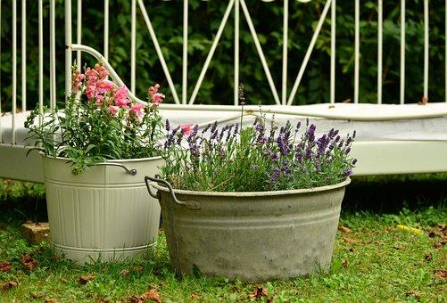 Floral Decoration, Garden, Lavender