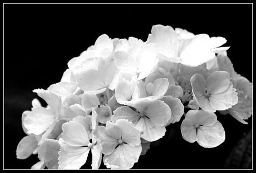 Black And White Photography Images Pixabay Download Free Pictures