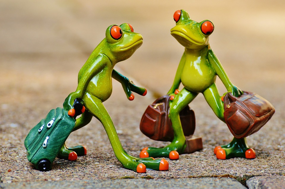 frogs funny travel luggage holdall go away - Images Of Frogs