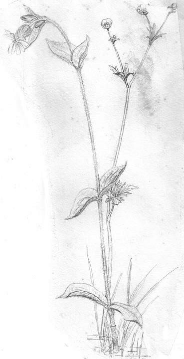 Bunga Tanaman Mekar Foto Gratis Di Pixabay