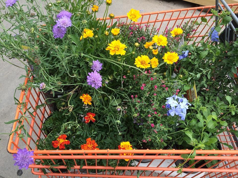 Tuinieren, Planten, Tuincentrum, Bloemen, Trolley