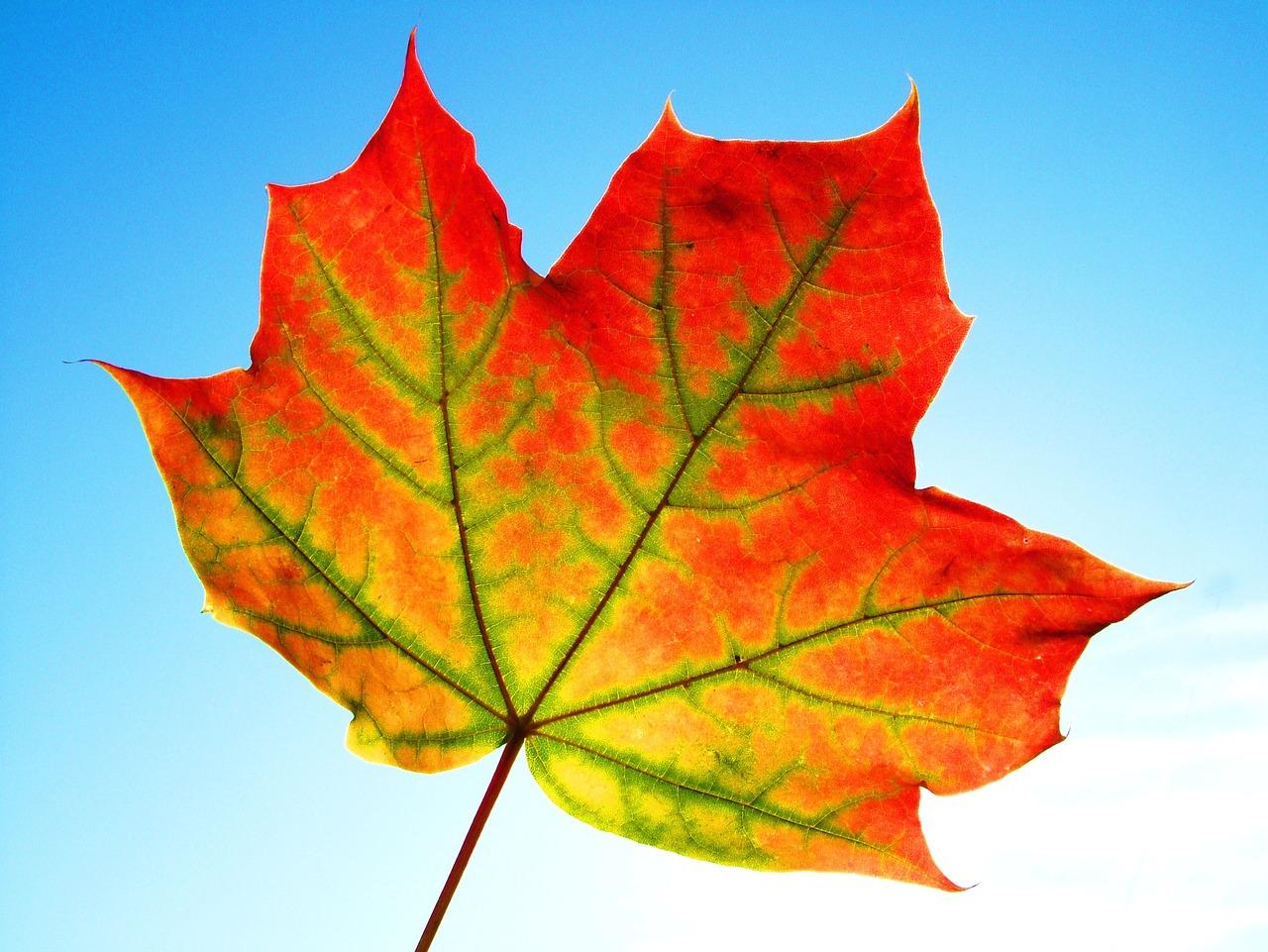картинки красивых осенних листьев по одному