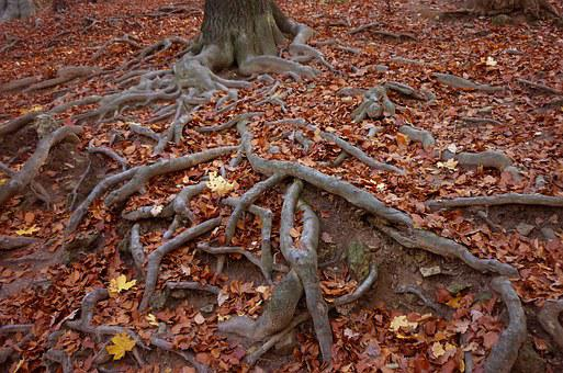 Roots, Wood, Holidays, Color, Autumn