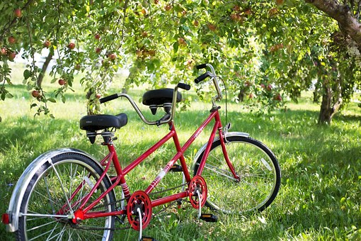 Tandem Bike, Bicycle, Apple Orchard