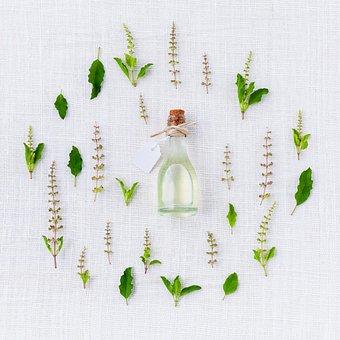 香り, バジル, スパイス, 緑, ホワイト, 本質的です, ハーブの, 有機
